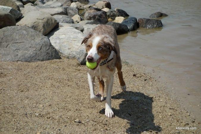 Bob, his ball, and his shadow.